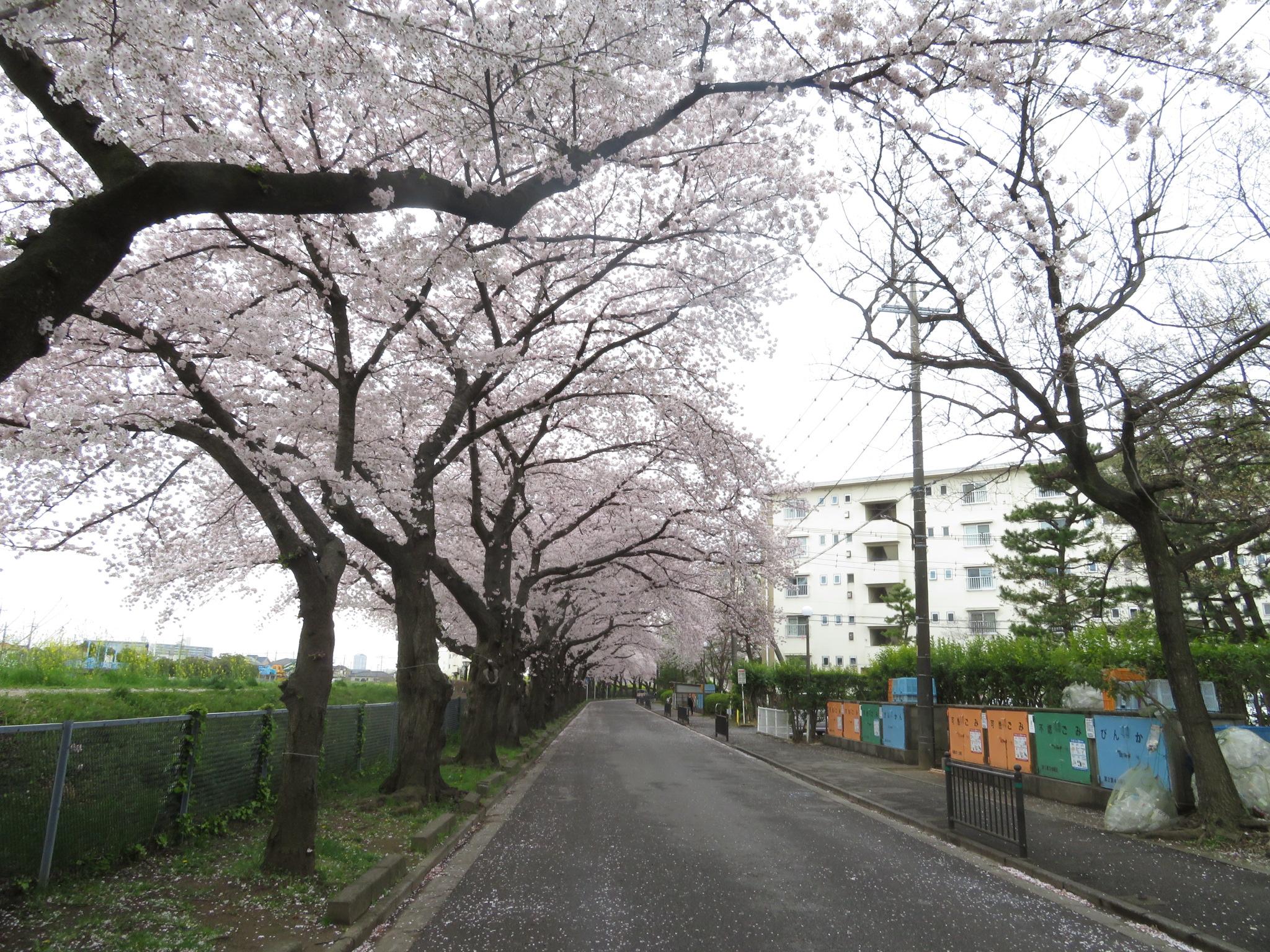 埼玉県A様邸B様邸007